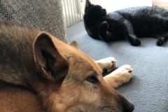 Cora kann auch mit Katzen :-)