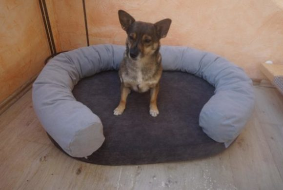Exklusiv bei TIN – kuscheliges Hundebett aus robustem Möbel-Veloursstoff