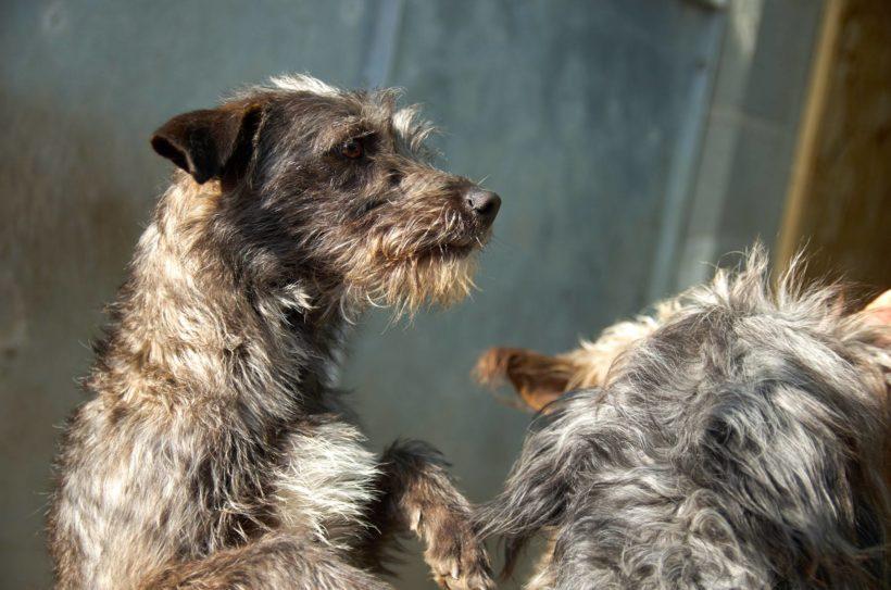 Dorka ! Transportpaten gefunden ! →10/2019 ♥vermittelt an die Tierhilfe Franken♥