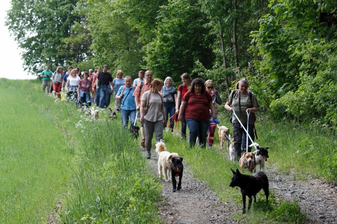 Viele tolle Hunde und Menschen zum TIN-Treffen am 25.5.19