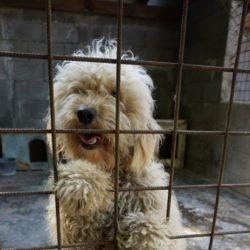 Dömi ♥Transportpate gefunden → 7/2019♥ vermittelt an die Tierhilfe Franken♥