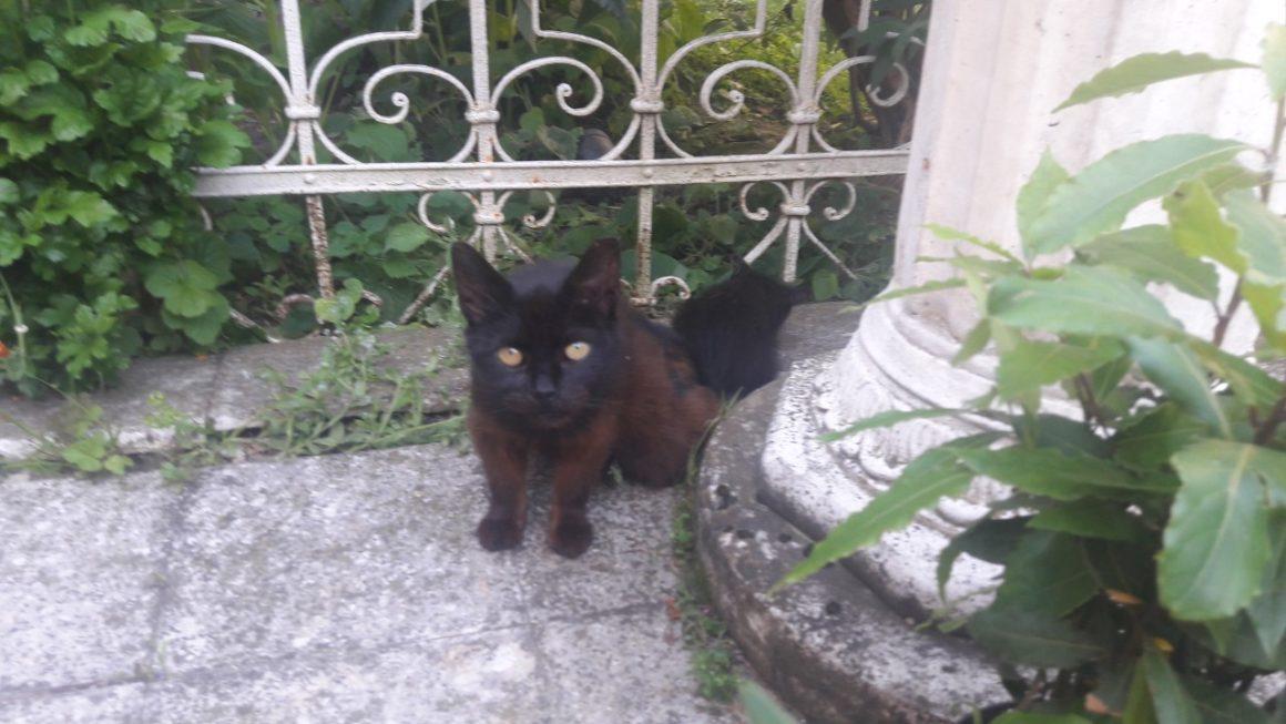 Katzenrettung in einem ungarischen Dorf in Zala