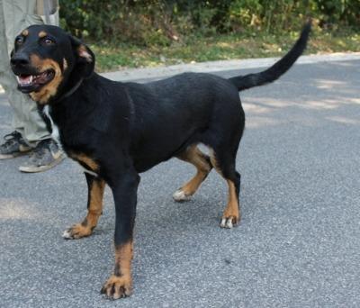 Hajnika ♥ Transportpate gefunden →6/2019 ♥ vermittelt an die Berner Sennenhunde in Not♥