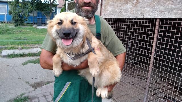 Dorisz 2  ♥vermittelt♥Transportpate gesucht →9/2019♥vermittelt an die Tierhilfe Franken ♥