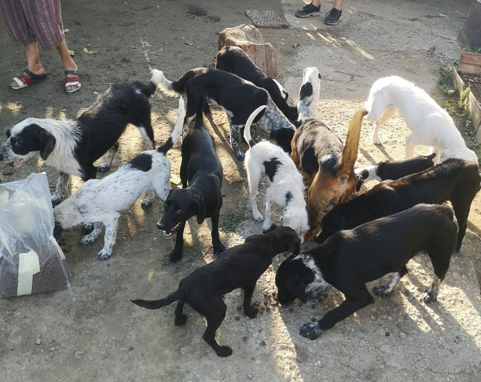 Livia (TH Zala) versorgte die Hunde in der Horrortierhaltung mit Flohmitteln, Futter und Entwurmungsmitteln