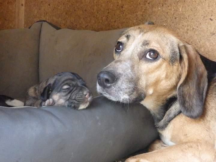 Hündin mit Welpen !Transportpaten leider nicht gefunden :-( →9/2019 ♥ vermittelt an Nothilfe für Hunde e.V. ♥