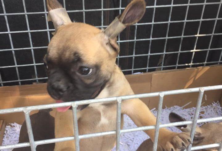 Hunde aus dem Ausland – Tierschutz oder Geldmacherei?