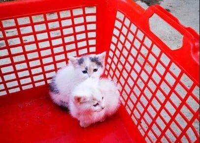 Katzenfutter-Spenden für die Katzenhilfe in Zala