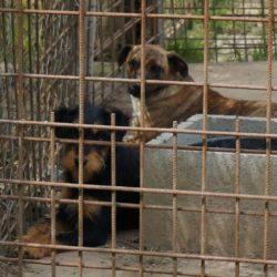 Das Tierheim in Mohács braucht Hundefutter