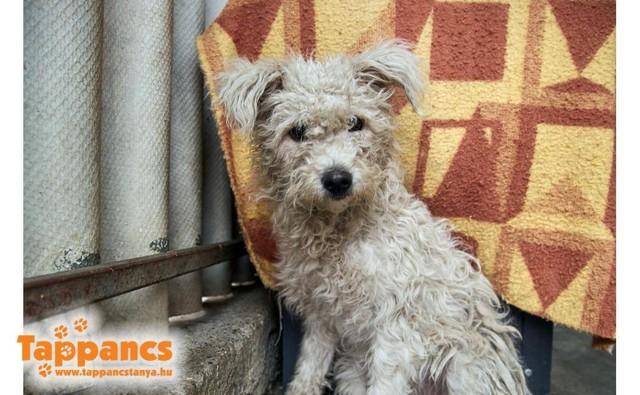Baba !Transportpate gefunden ♥vermittelt an die Tierhilfe Franken♥ →02/2020