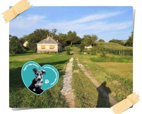 In Livias kleinem Tierarsyl (TH Zala) sind große Baumaßnahmen geplant…