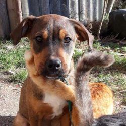 Soma !Ausreise/Transportpaten gesucht ! vermittelt an die Nothilfe für Hunde →3/2020