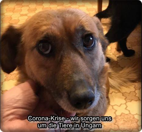 Die Situation in den ungarischen Tierheimen in der Corona-Krise…