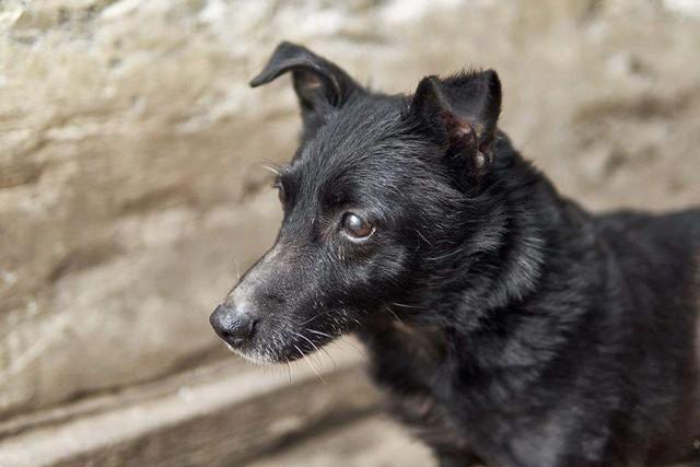 Pimpi !Transportpate gefunden! ♥vermittelt an die Tierhilfe Franken♥ →13.06.2020