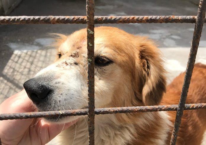 Konjak !Transportpaten gesucht! ♥vermittelt an die Tierhilfe Franken♥ →11.07.2020