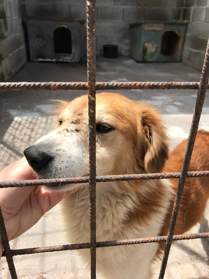 Konjak !Transportpaten gefunden! ♥vermittelt an die Tierhilfe Franken♥ →11.07.2020