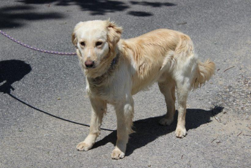 Szepi 2 ! ♥vermittelt an die Tierhilfe Franken♥ →13.06.2020