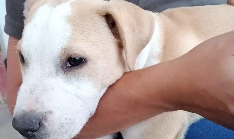Tappancs 5 ♥vermittelt an Nothilfe für Hunde Österreich♥ →07/2020