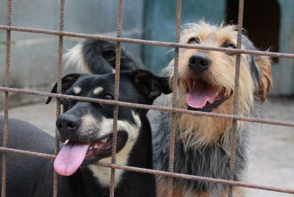 Tierarztkosten- und Futterkostenzuschuss für unsere Tierheime in Ungarn