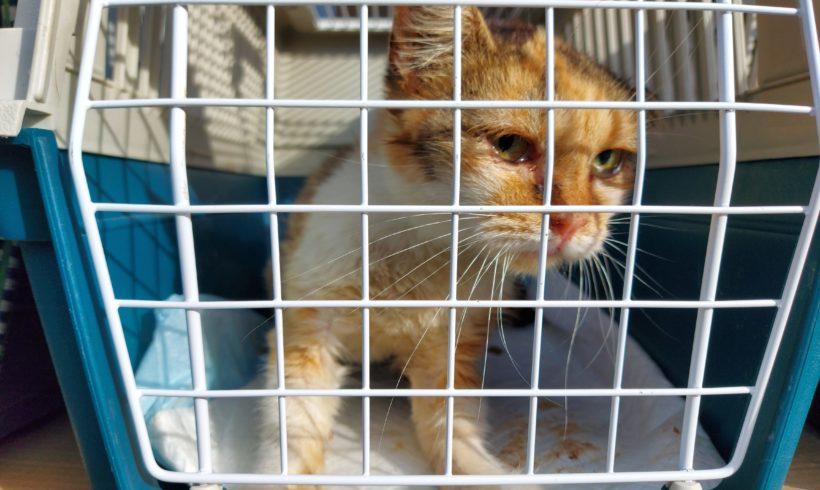 Katzenkastration in Dombovár