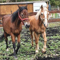 Zwei Pferde endlich im Glück