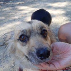 Szaffi ! Transportpaten gefunden ! ♥vermittelt an die Tierhilfe Franken♥ →02.10.20