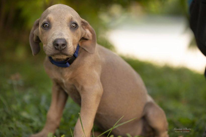 Carlos ♥vermittelt an die Nothilfe für Hunde in Österreich♥