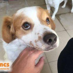 Csili !Transportpaten gefunden ❤️vermittelt an die Tierhilfe Franken ❤️ →14.11.2020