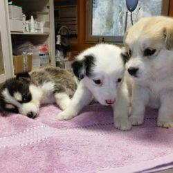 Tierhilfe Zala (Livia) und Katzenhilfe Zala bedankt sich für die Futterlieferung….