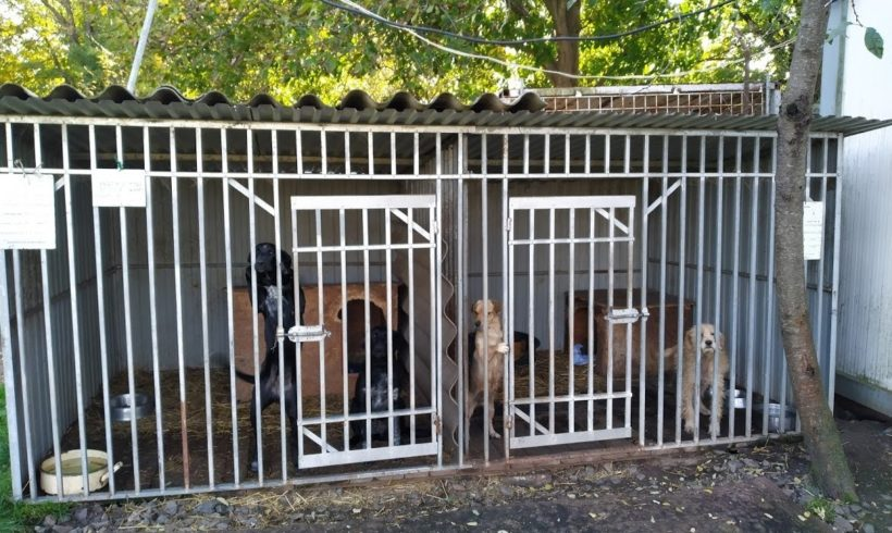 Sammelaktion Spot on für Hunde aus der Tötungsstation Dombovar