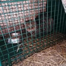 Katzen-Kastrationsaktion im Landkreis Kulmbach