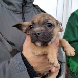 Jack Mohacs   ♥ zieht am 20.03. zur Tierhilfe Franken ♥ Transportpaten gefunden! ♥
