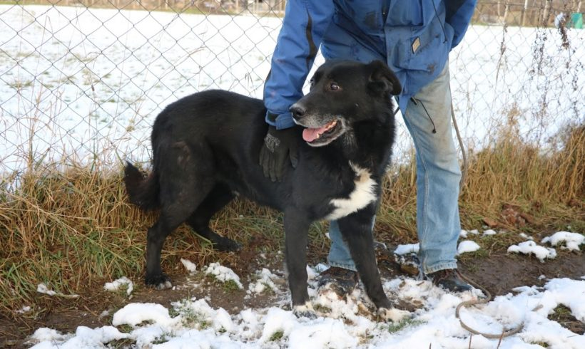 Doki ♥ vermittelt an Berner Sennenhunde in Not ♥ Transportpaten gefunden! 10.4.2021