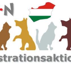 Kastrationsaktion in Dombovár wieder möglich