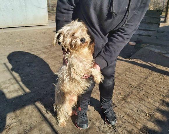 Nudli Szeged ♥vermittelt an die Tierhilfe Franken, Transportpaten gefunden! 30.04.2021