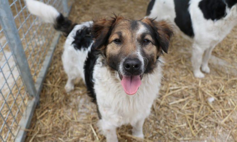 Vito ♥ vermittelt an die Tierhilfe Franken e.V. ♥ er sucht Transportpaten