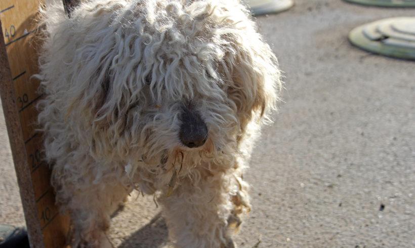 Karcsika ! Ausreise + Transportpaten gesucht ! ♥vermittelt an die Tierhilfe Franken♥