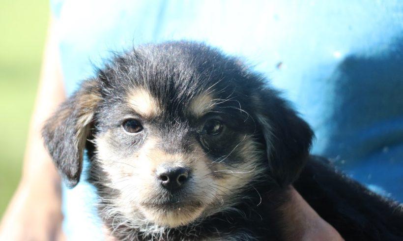 Pedro ♥ vermittelt nach Österreich an Nothilfe für Hunde♥