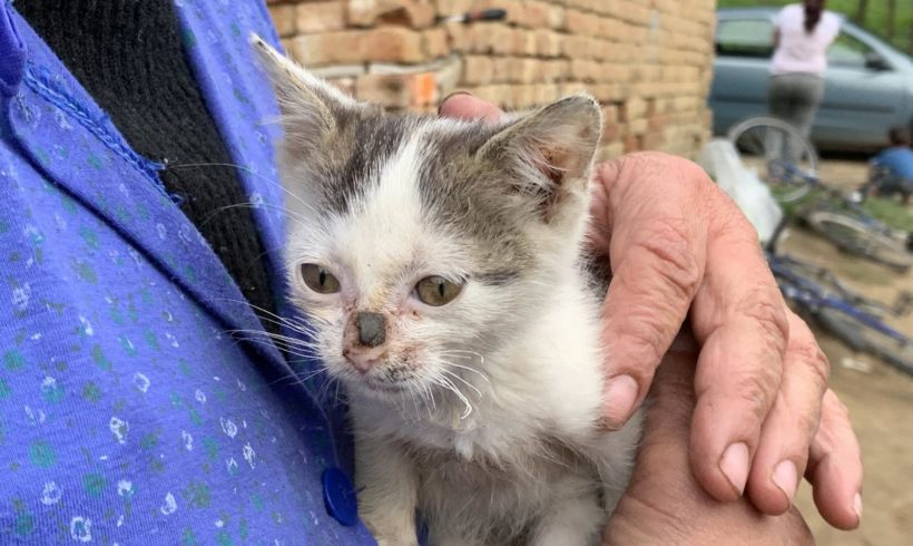 Tierhilfe Zala meldet: So viele trächtige Katzen wie schon lange nicht mehr….