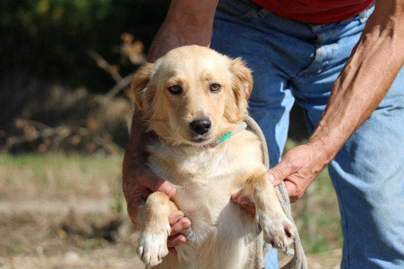 Szöszi ♥ vermittelt an Nothilfe für Hunde in Österreich ♥