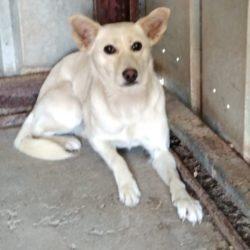 Potyi 5 ♥ vermittelt an die Tierhilfe Franken♥ sie sucht Transportpaten zum 1.10.21
