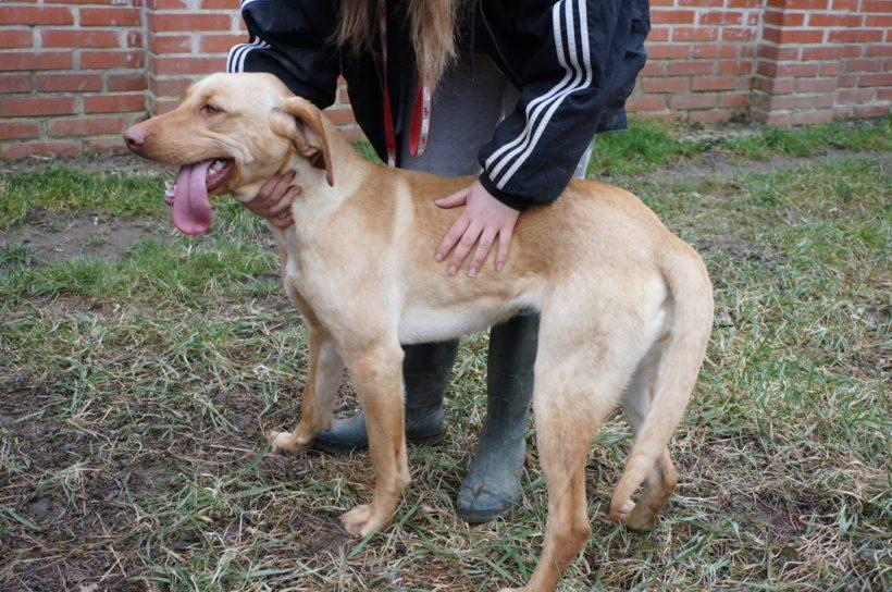 Bigi ♥vermittelt an die Tierhilfe Franken♥