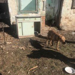 Tierschutzarbeit vor Ort in Zala
