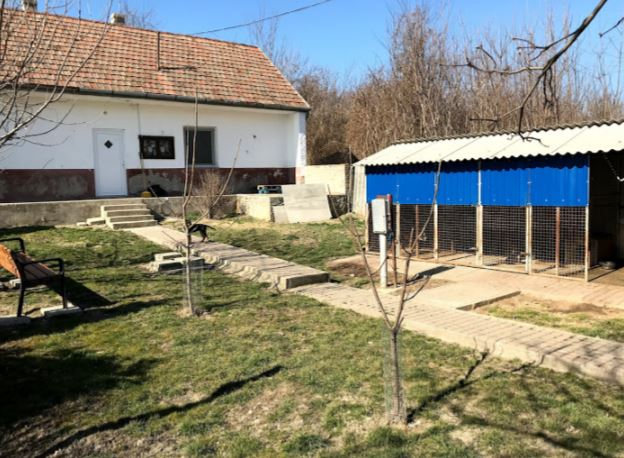 Tierheim Mohács – grosser Auslauf erstellt und Kastration ist geplant
