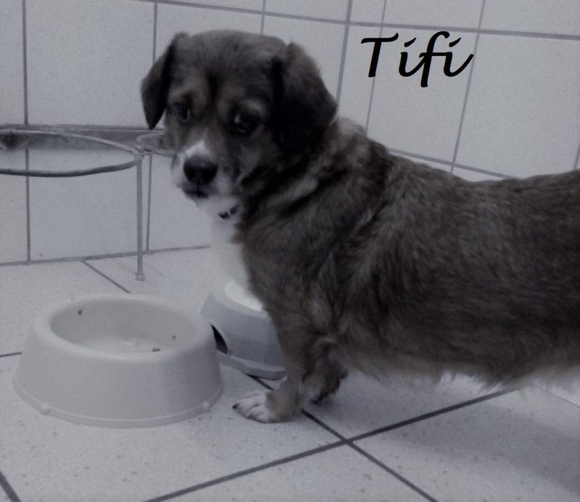 Tifi, verstorben Ende Januar 2019